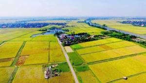 Top 5 kinh nghiệm đầu tư bất động sản nông nghiệp an toàn, sinh lời
